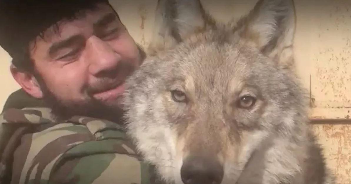 Почему чеченцы ассоциируют себя с волками