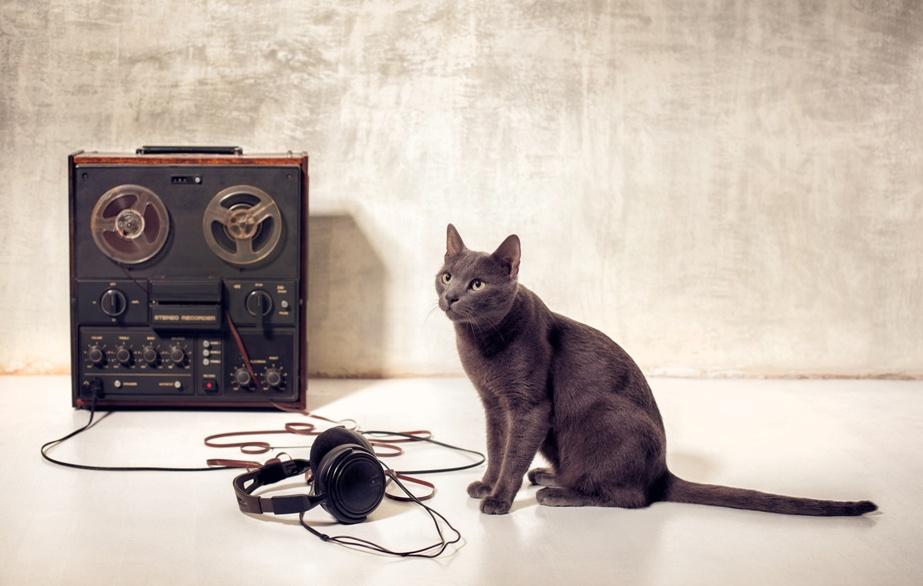 Эксперименты с котом
