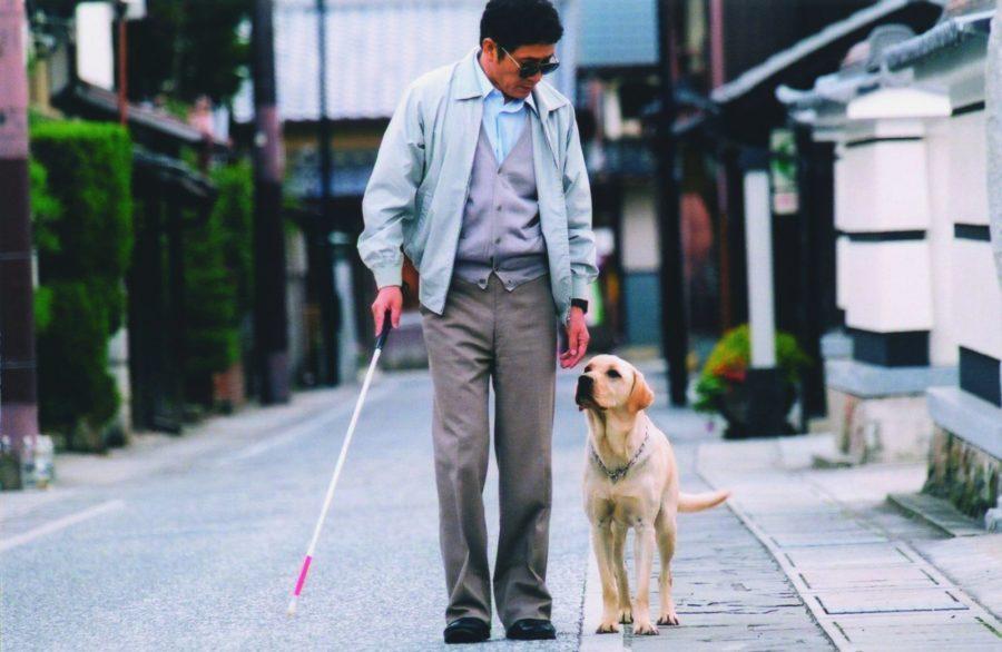 Слабовидящий человек с собакой