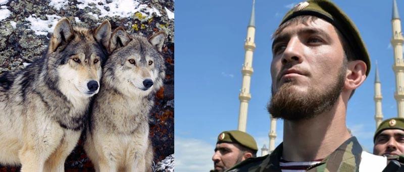 Чеченцы уверяют, что волк — это одно из самых справедливых и благородных животных во всем мире
