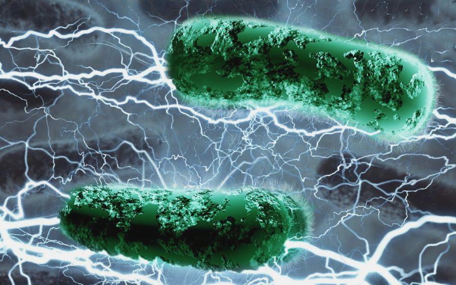 Микроб вырабатывающий ток